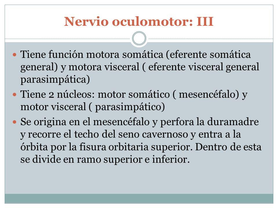 Nervio oculomotor: III