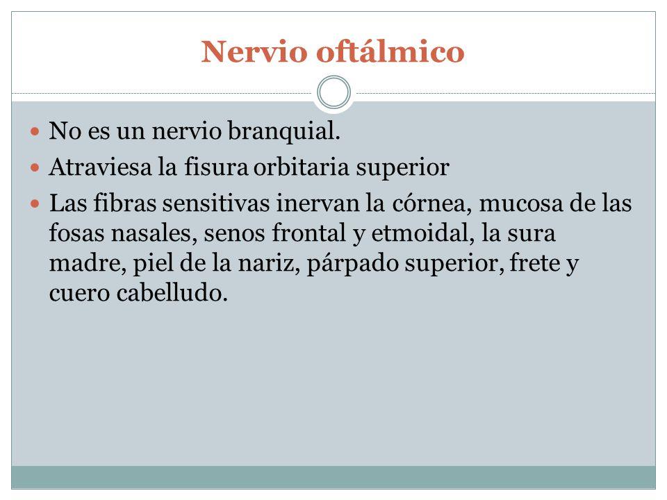 Nervio oftálmico No es un nervio branquial.