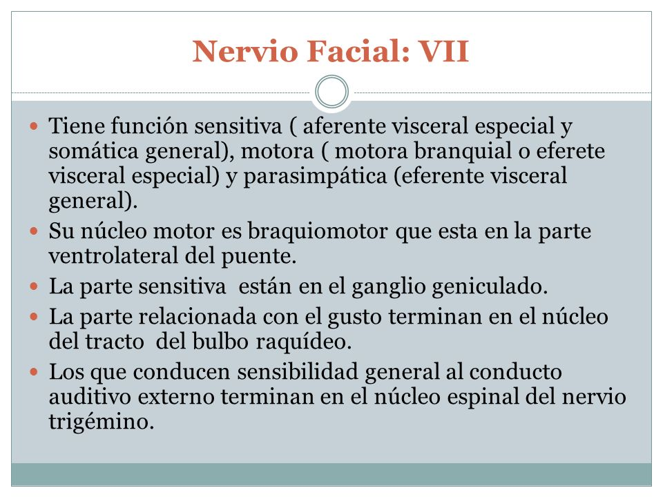Nervio Facial: VII