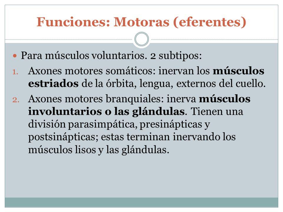 Funciones: Motoras (eferentes)