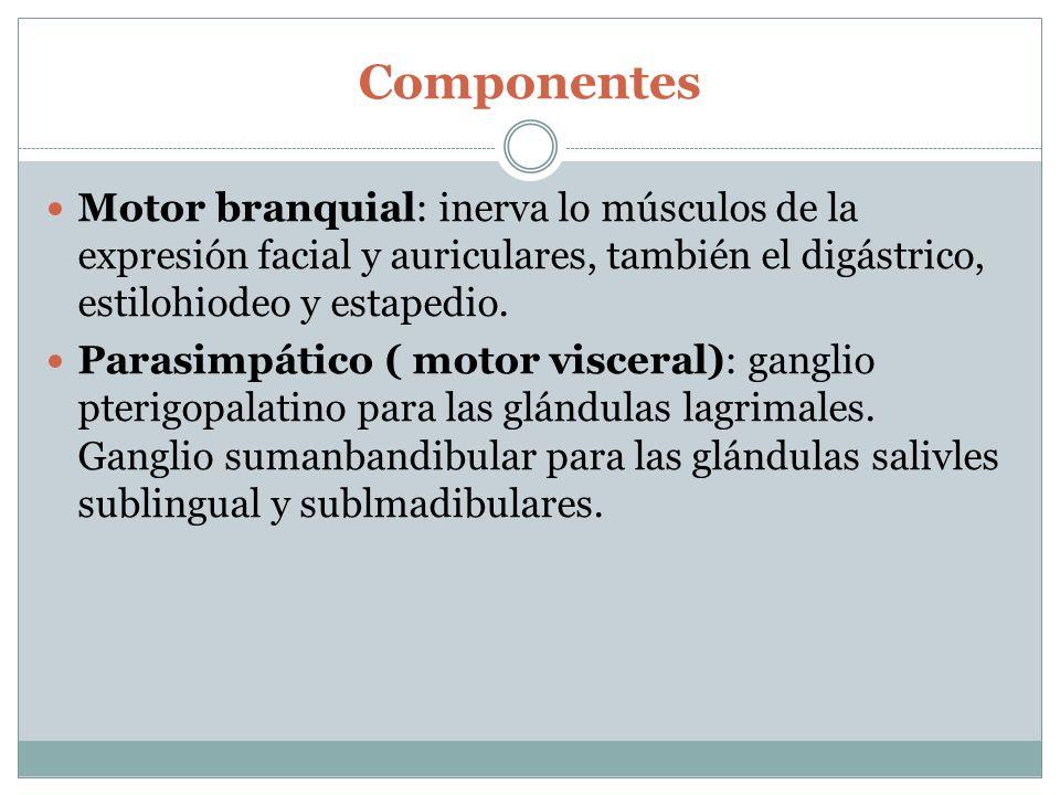 Componentes Motor branquial: inerva lo músculos de la expresión facial y auriculares, también el digástrico, estilohiodeo y estapedio.