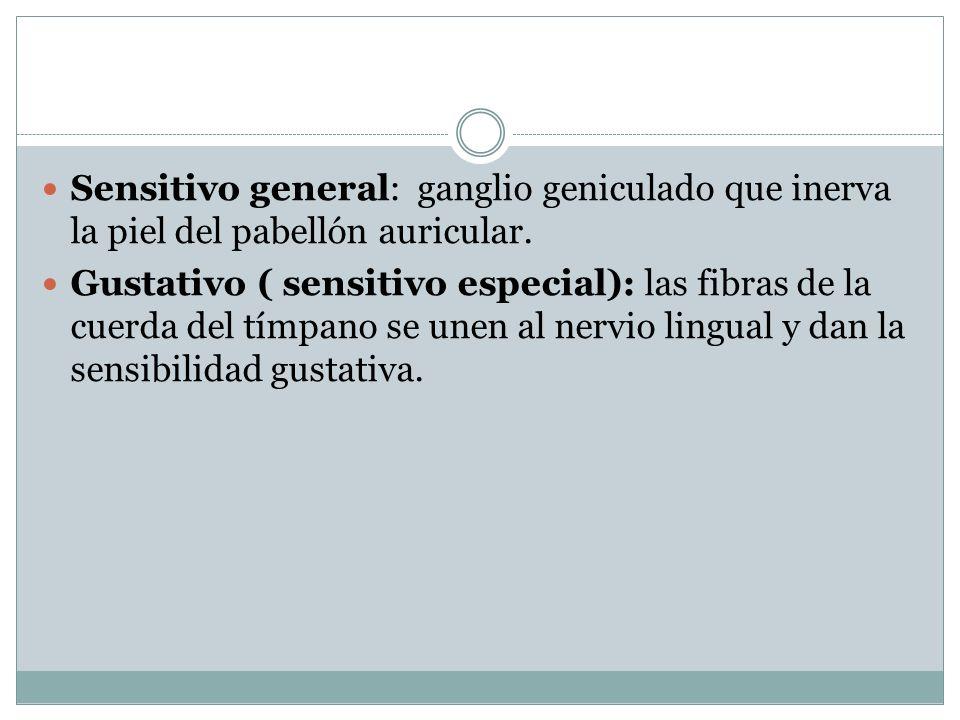 Sensitivo general: ganglio geniculado que inerva la piel del pabellón auricular.