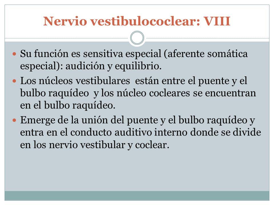 Nervio vestibulococlear: VIII