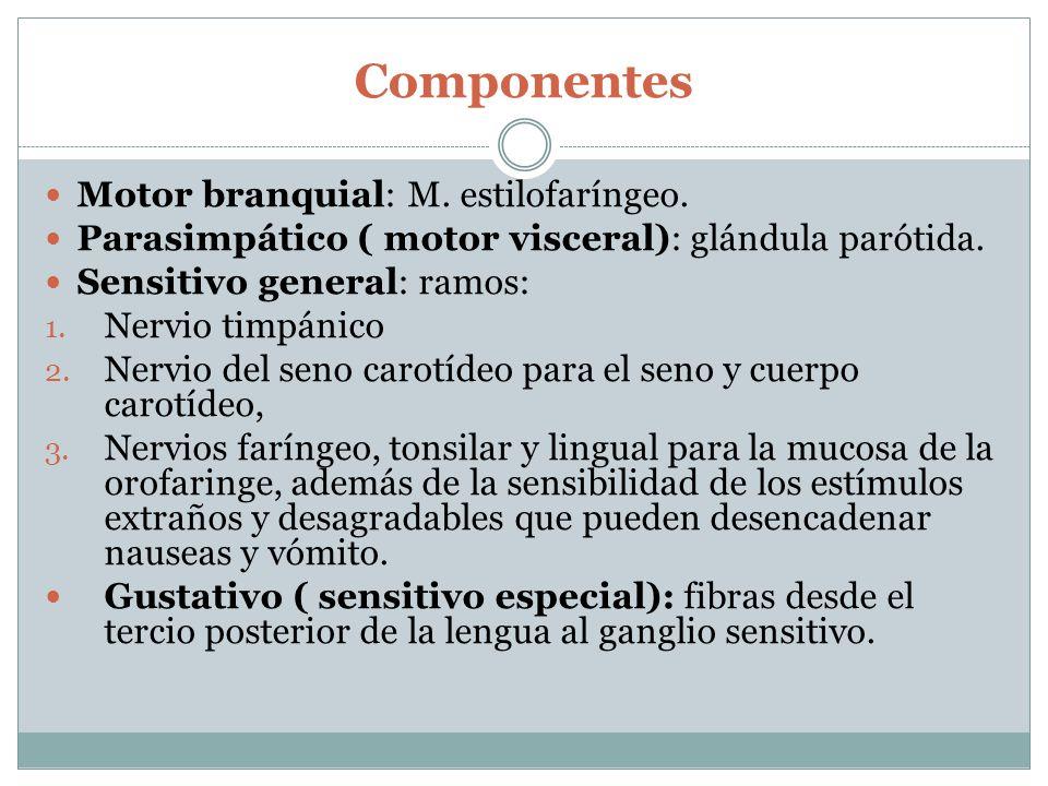 Componentes Motor branquial: M. estilofaríngeo.