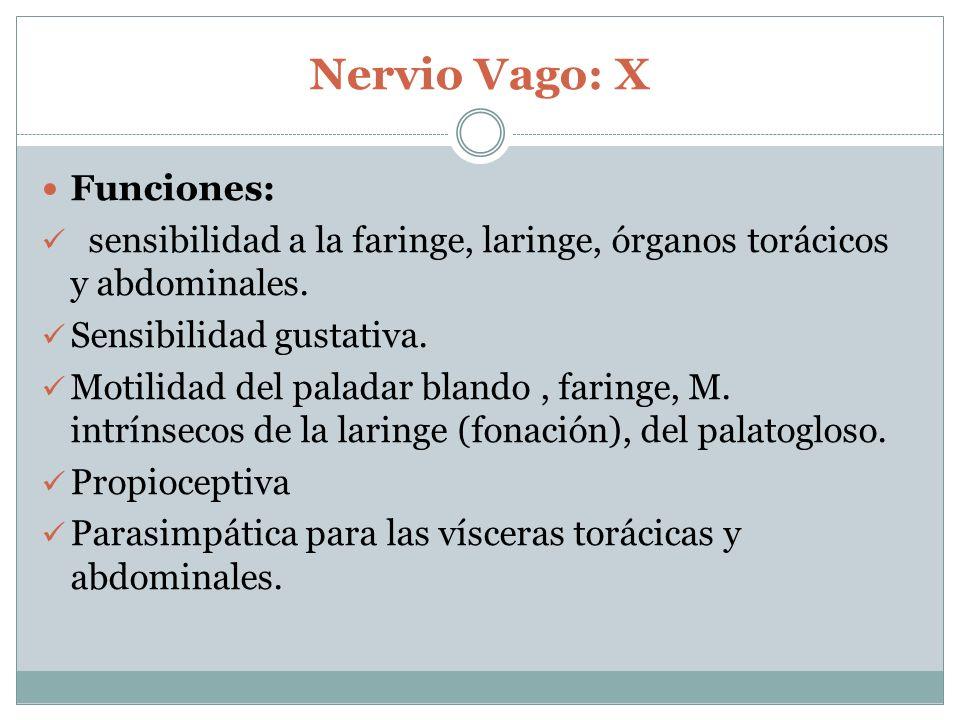 Nervio Vago: X Funciones: