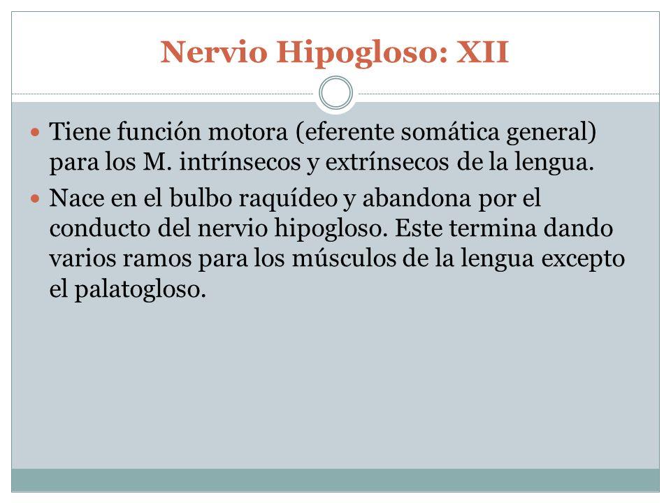 Nervio Hipogloso: XII Tiene función motora (eferente somática general) para los M. intrínsecos y extrínsecos de la lengua.