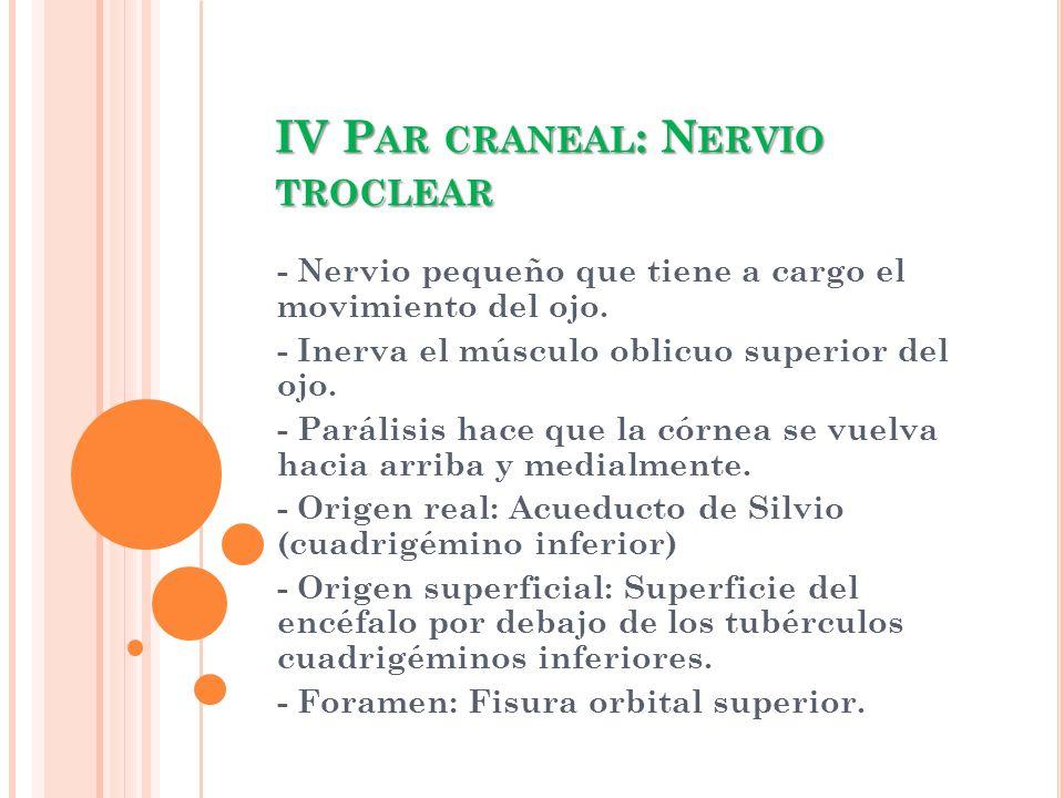 IV Par craneal: Nervio troclear