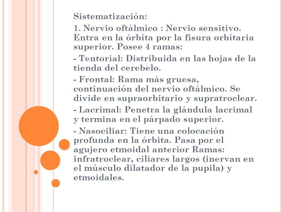 Sistematización: 1. Nervio oftálmico : Nervio sensitivo. Entra en la órbita por la fisura orbitaria superior. Posee 4 ramas: