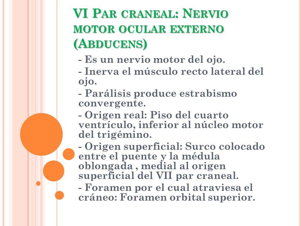 VI Par craneal: Nervio motor ocular externo (Abducens)