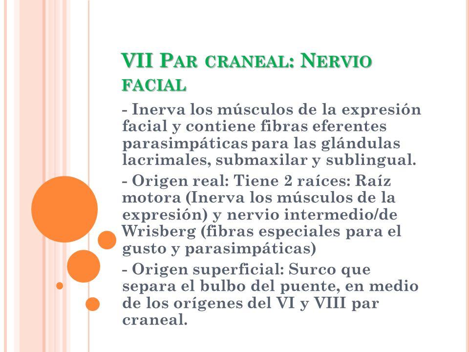 VII Par craneal: Nervio facial