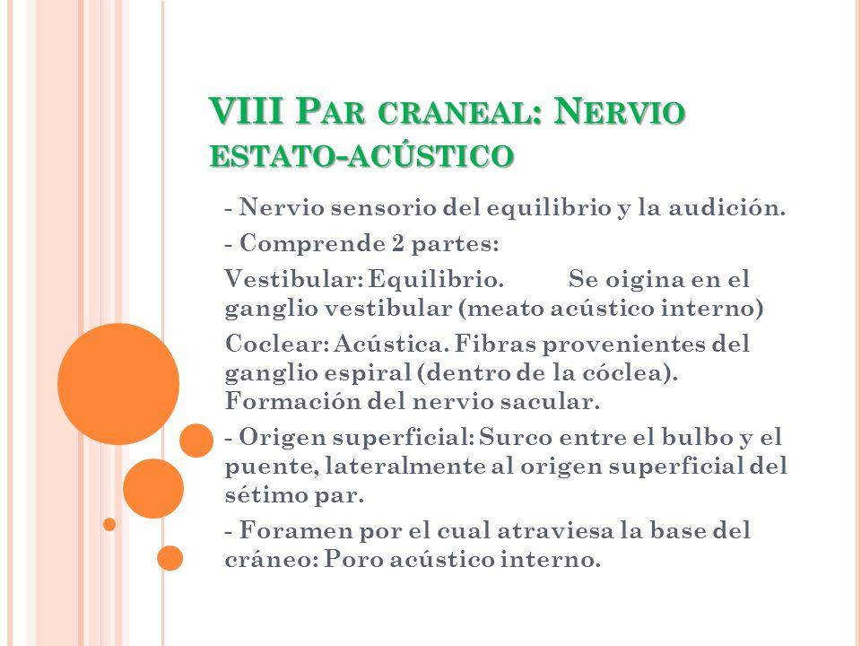 VIII Par craneal: Nervio estato-acústico