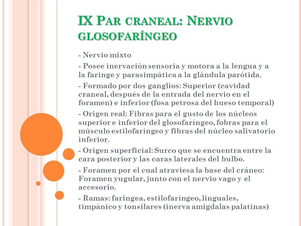 IX Par craneal: Nervio glosofaríngeo