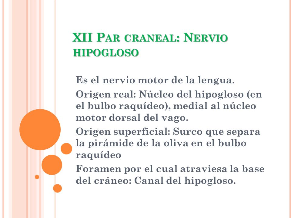 XII Par craneal: Nervio hipogloso