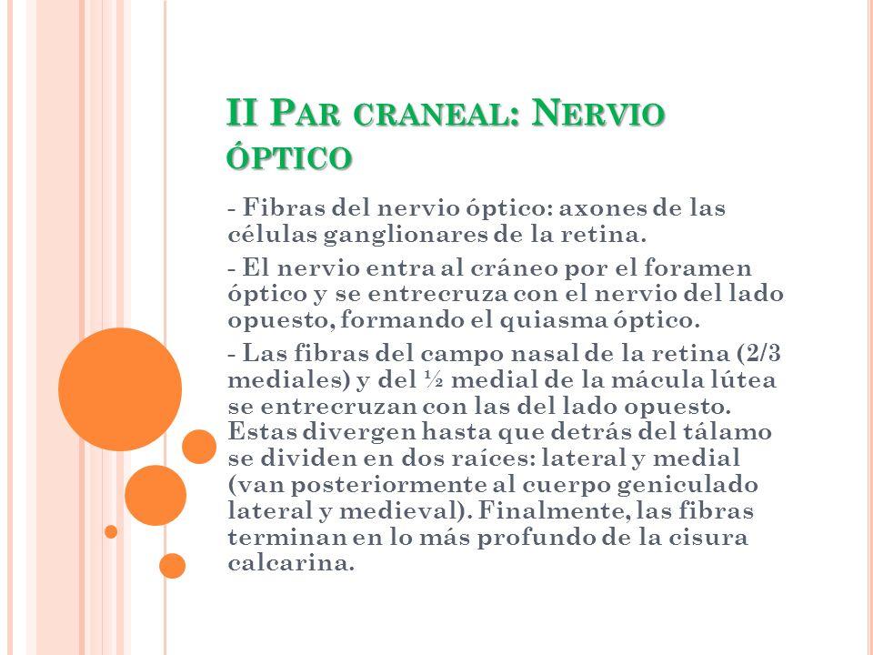 II Par craneal: Nervio óptico