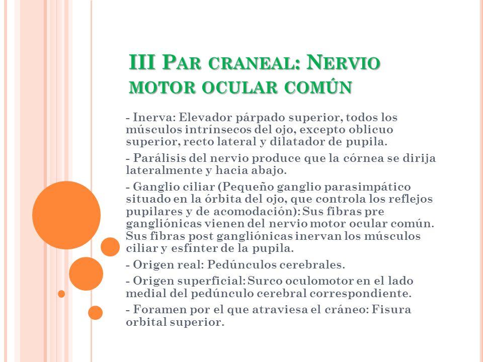 III Par craneal: Nervio motor ocular común