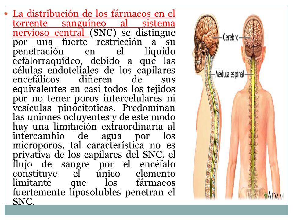 La distribución de los fármacos en el torrente sanguíneo al sistema nervioso central (SNC) se distingue por una fuerte restricción a su penetración en el liquido cefalorraquídeo, debido a que las células endoteliales de los capilares encefálicos difieren de sus equivalentes en casi todos los tejidos por no tener poros intercelulares ni vesículas pinocitoticas.