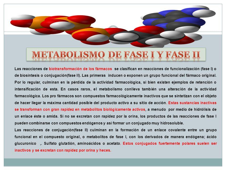 Metabolismo de fase I y fase II