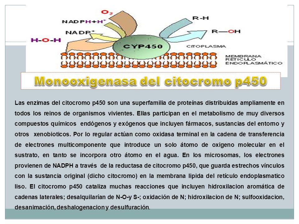 Monooxigenasa del citocromo p450