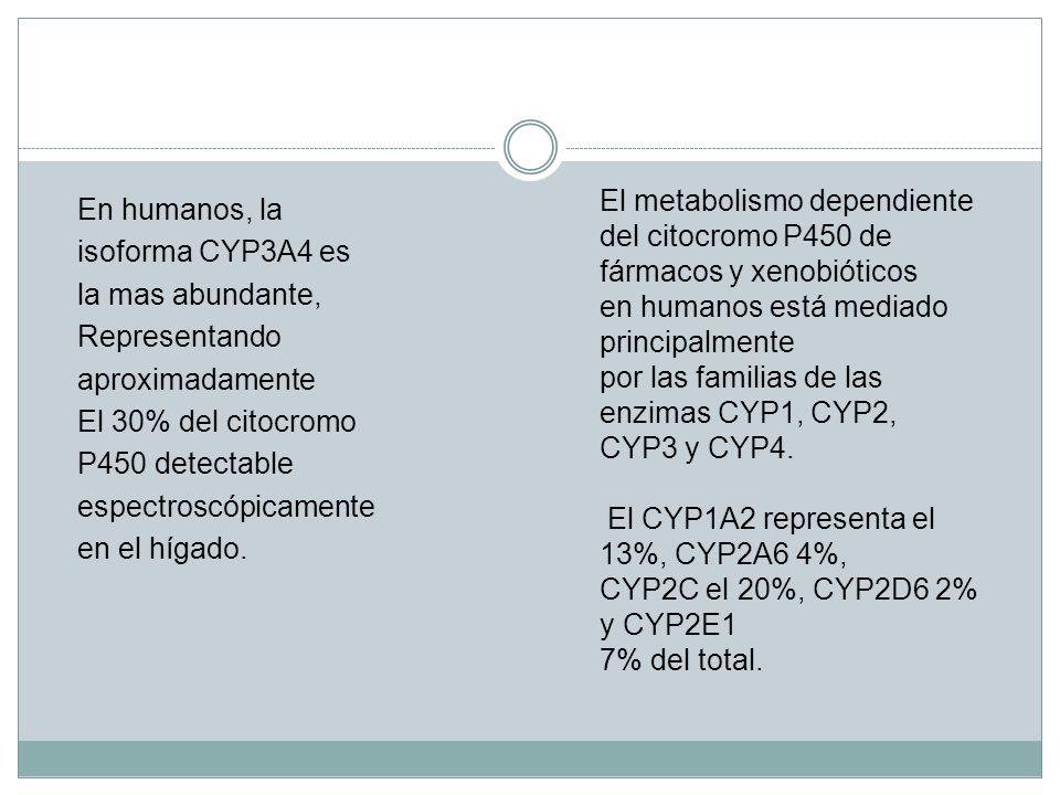 El metabolismo dependiente del citocromo P450 de fármacos y xenobióticos