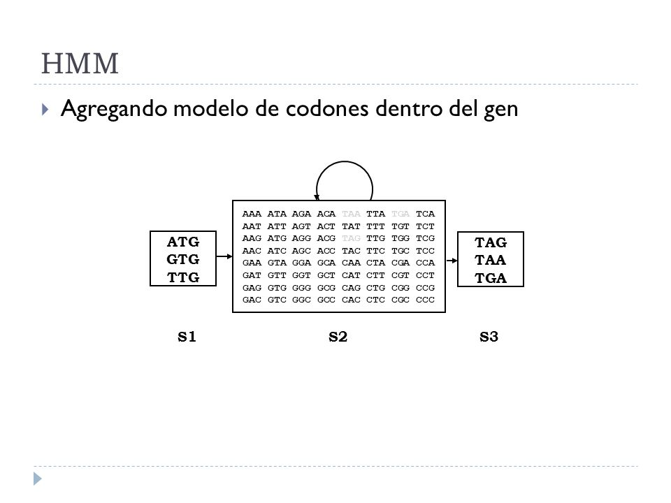 HMM Agregando modelo de codones dentro del gen ATG GTG TTG TAG TAA TGA