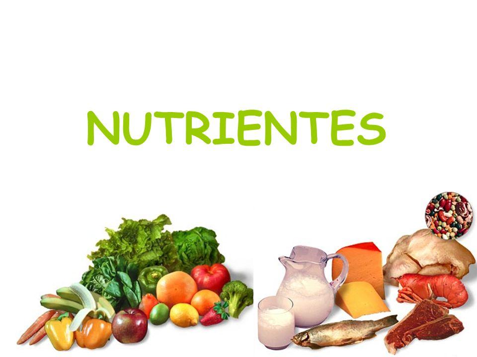 Resultado de imagen para nutrientes