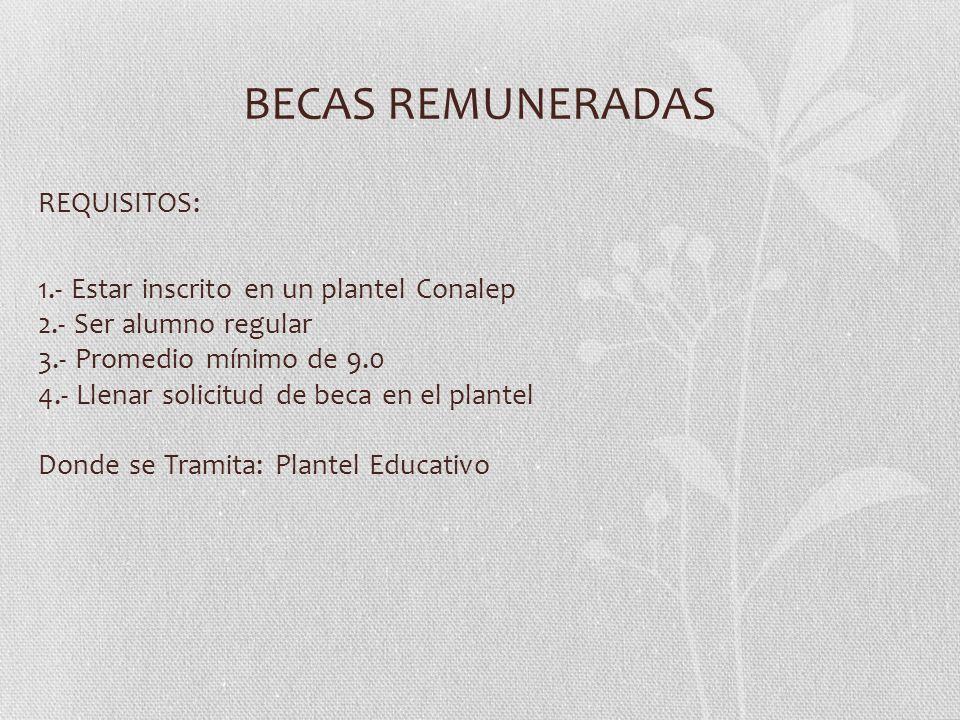 BECAS REMUNERADAS REQUISITOS: