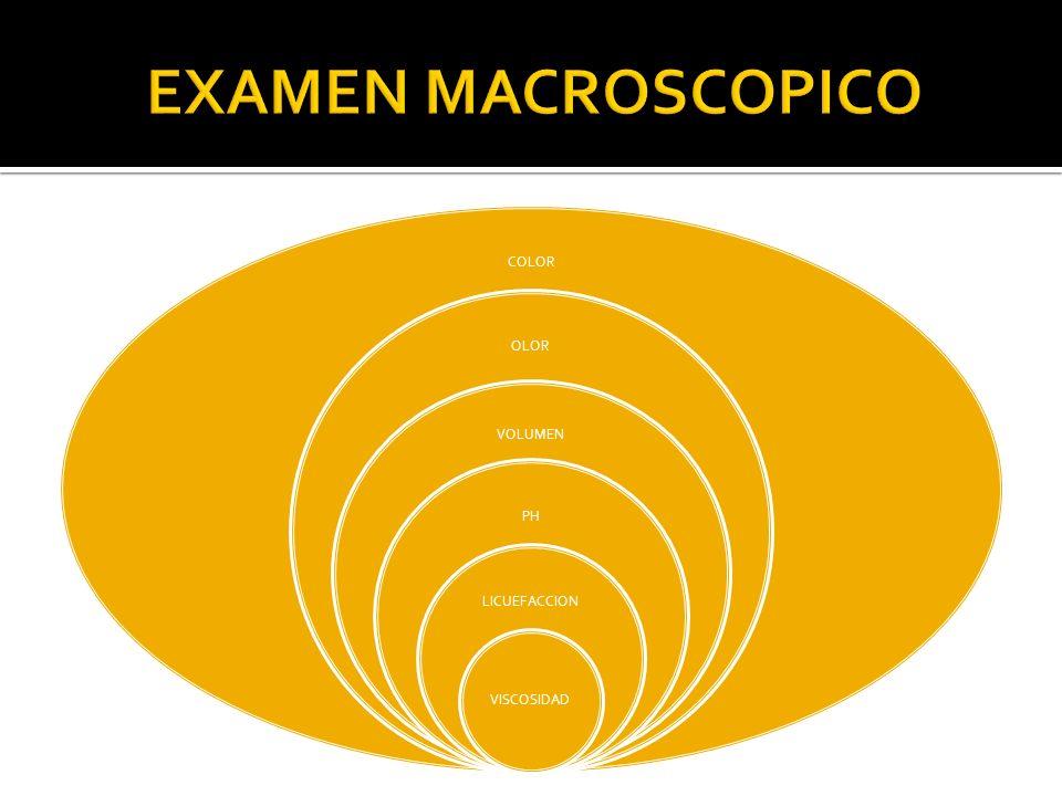 EXAMEN MACROSCOPICO COLOR OLOR VOLUMEN PH LICUEFACCION VISCOSIDAD