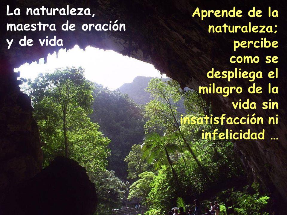 La naturaleza, maestra de oración y de vida Aprende de la naturaleza;
