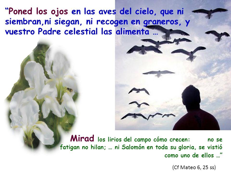 Poned los ojos en las aves del cielo, que ni siembran,ni siegan, ni recogen en graneros, y vuestro Padre celestial las alimenta …