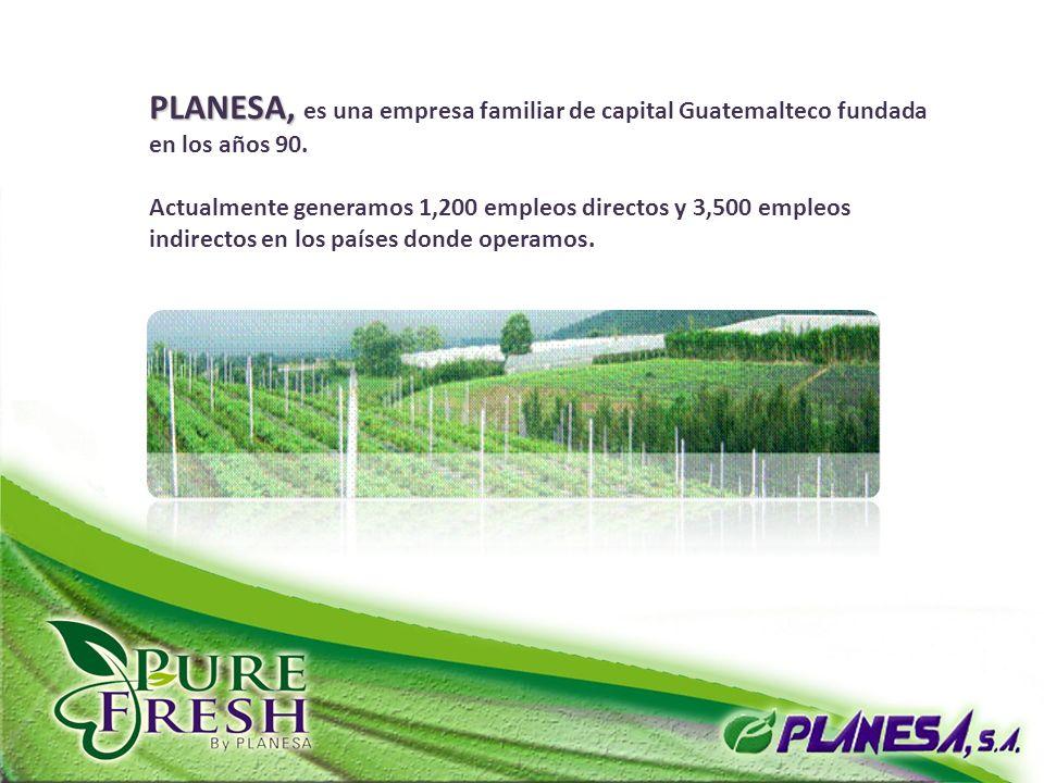 PLANESA, es una empresa familiar de capital Guatemalteco fundada en los años 90.