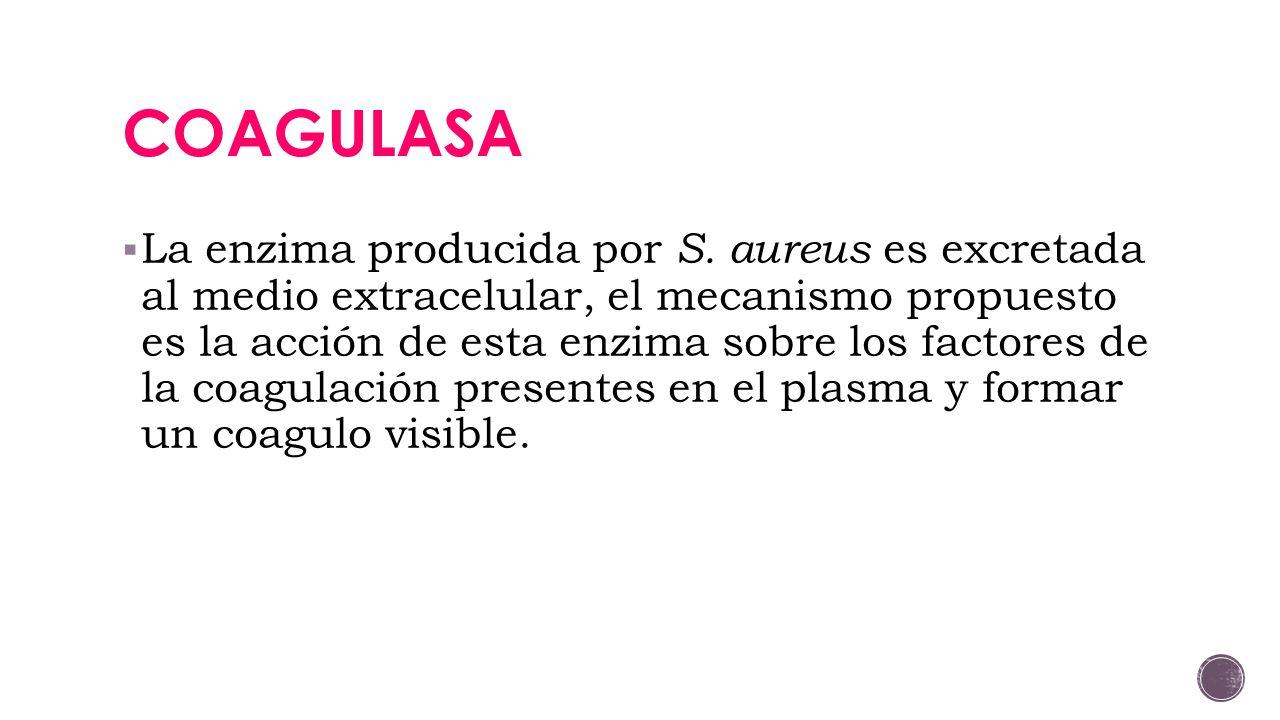 COAGULASA
