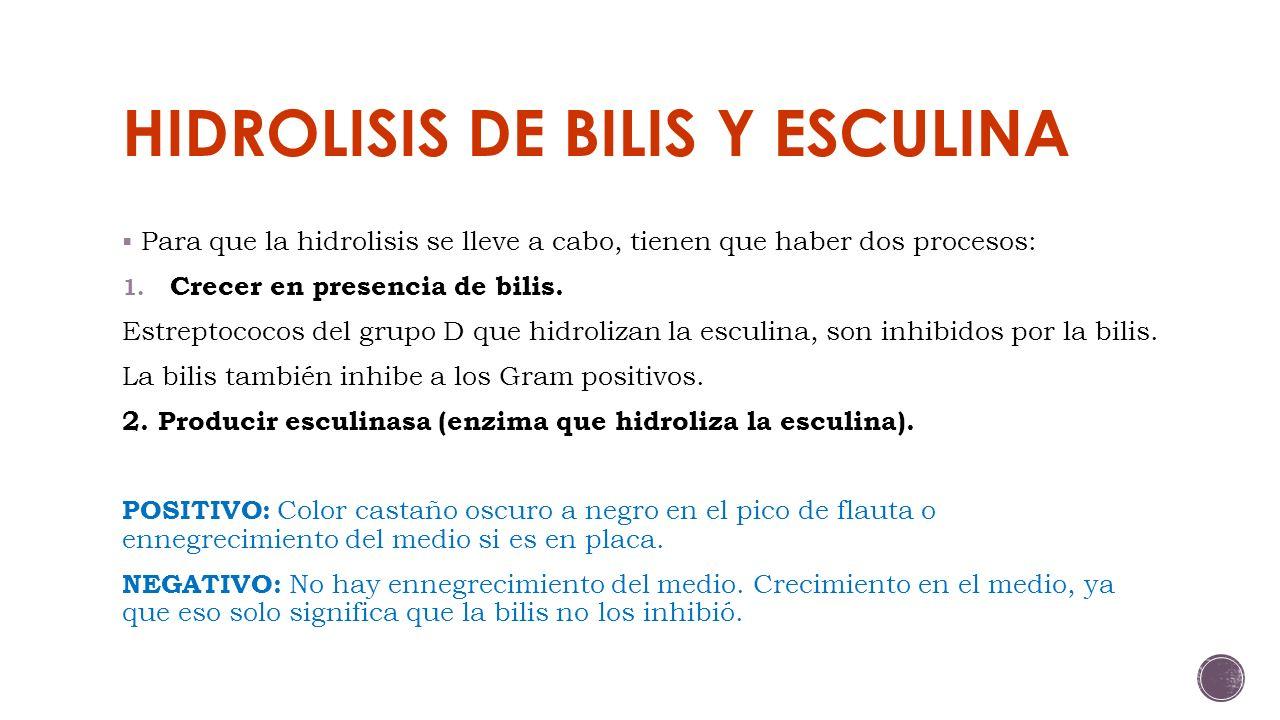 HIDROLISIS DE BILIS Y ESCULINA