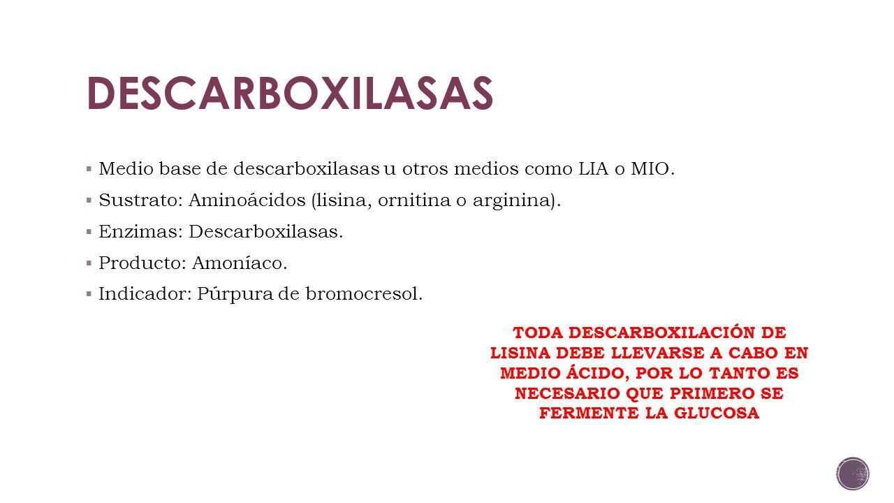 DESCARBOXILASAS Medio base de descarboxilasas u otros medios como LIA o MIO. Sustrato: Aminoácidos (lisina, ornitina o arginina).