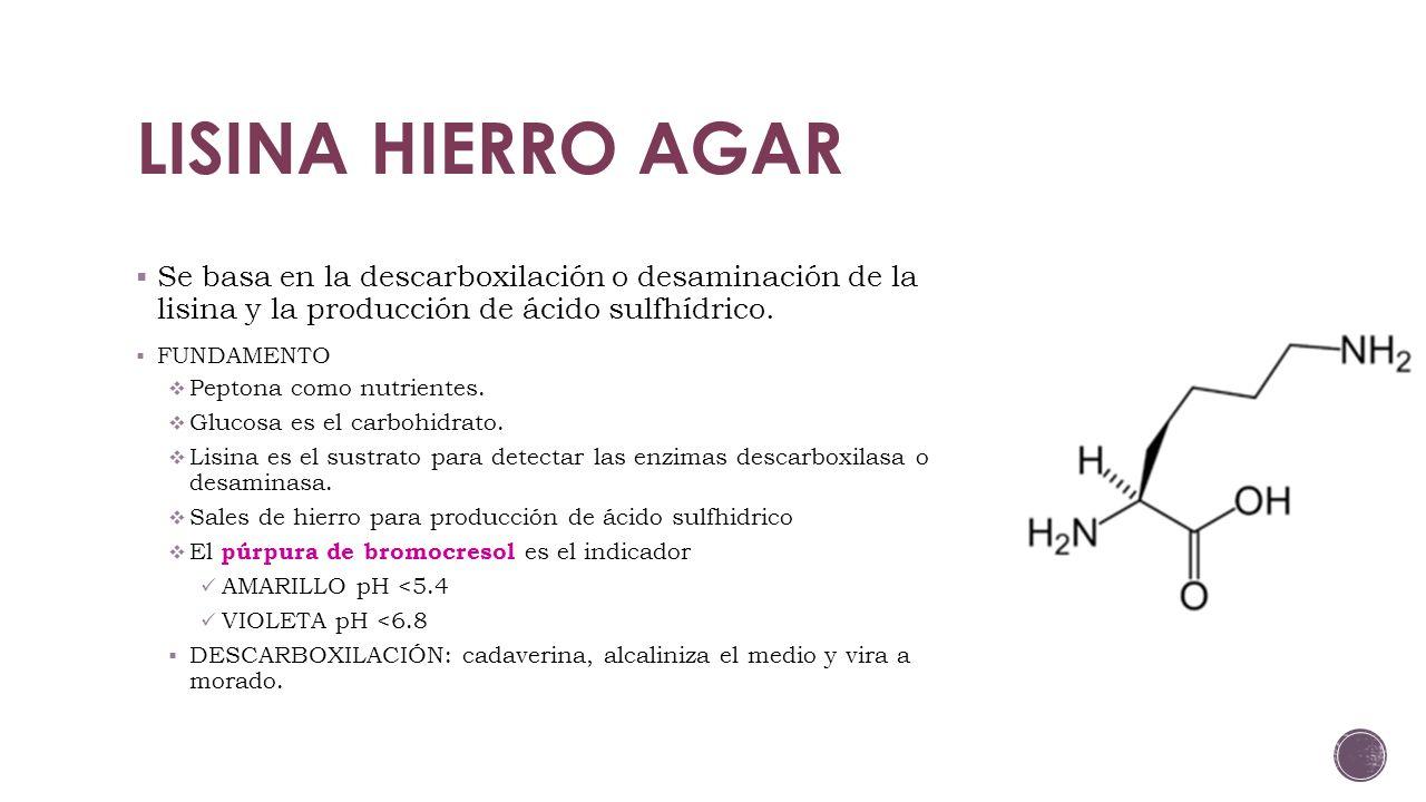 LISINA HIERRO AGAR Se basa en la descarboxilación o desaminación de la lisina y la producción de ácido sulfhídrico.