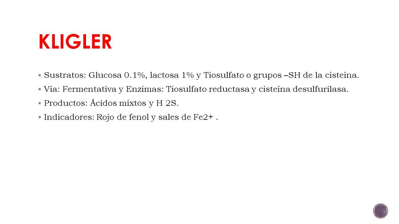 KLIGLER Sustratos: Glucosa 0.1%, lactosa 1% y Tiosulfato o grupos –SH de la cisteína.