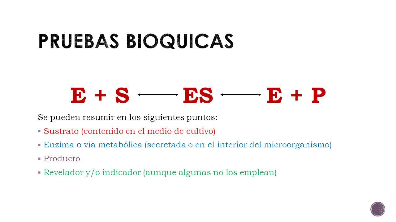 E + S ES E + P PRUEBAS BIOQUICAS