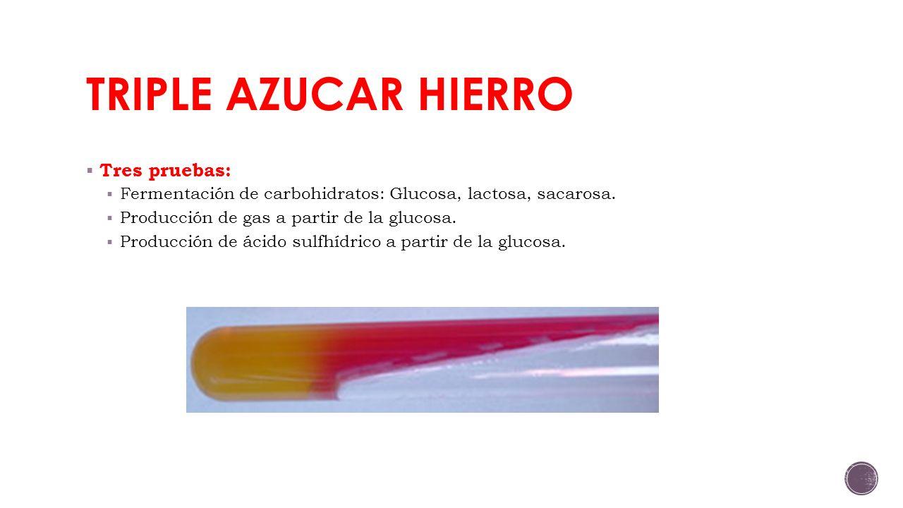 TRIPLE AZUCAR HIERRO Tres pruebas: