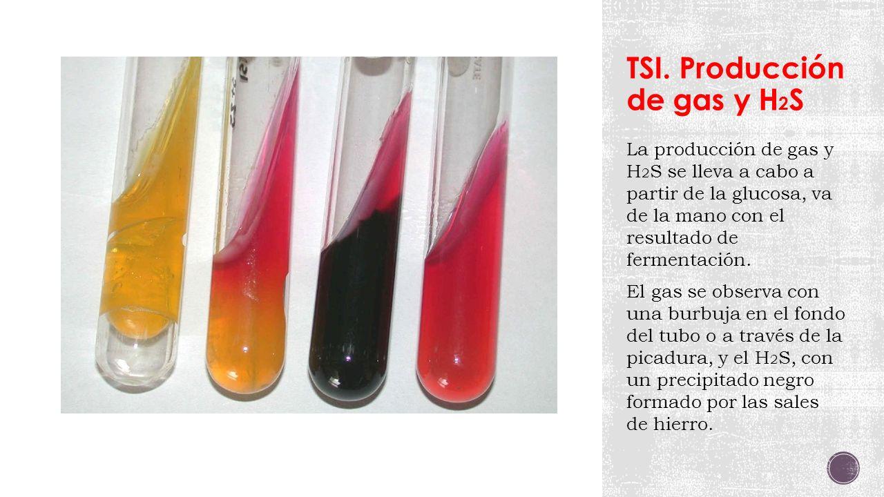 TSI. Producción de gas y H2S