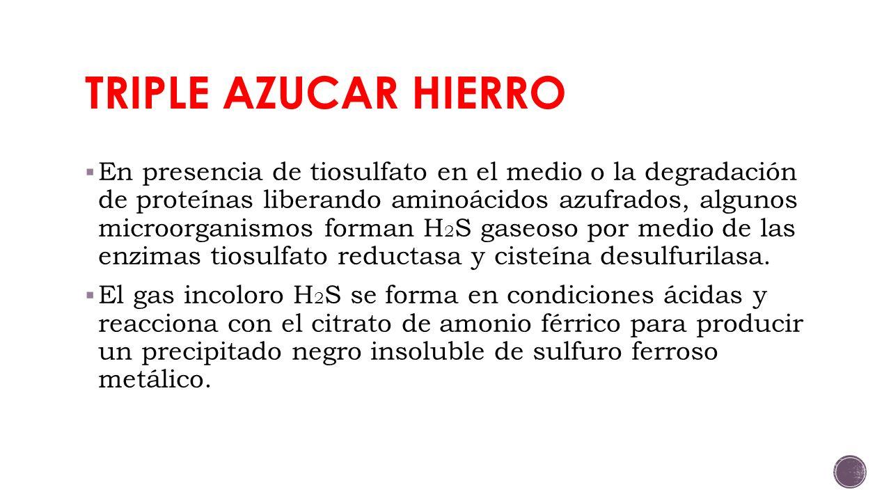 TRIPLE AZUCAR HIERRO