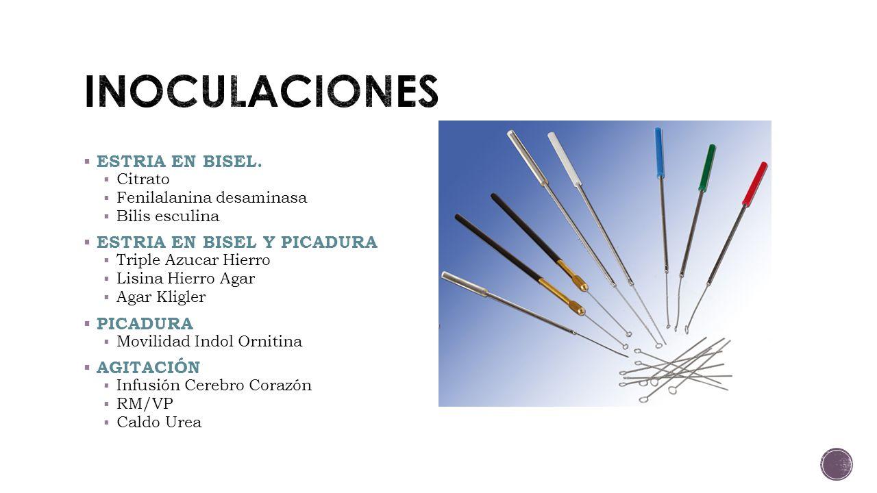 INOCULACIONES ESTRIA EN BISEL. ESTRIA EN BISEL Y PICADURA PICADURA