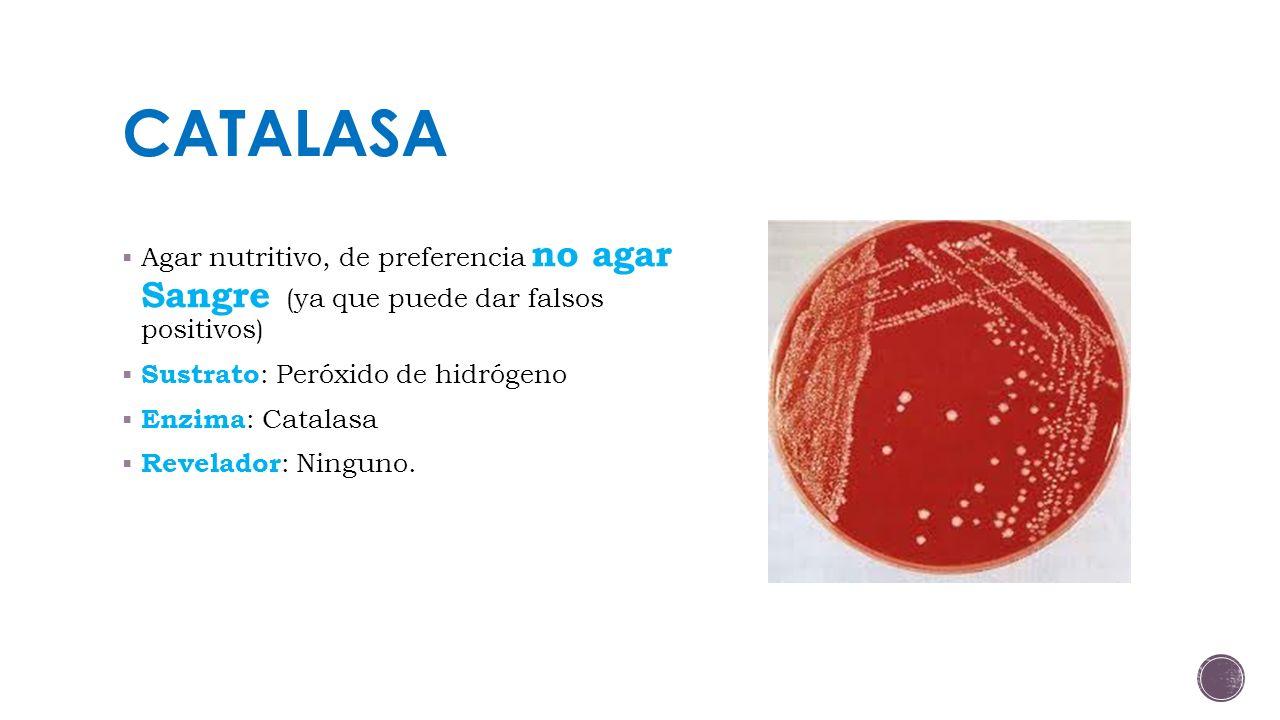CATALASA Agar nutritivo, de preferencia no agar Sangre (ya que puede dar falsos positivos) Sustrato: Peróxido de hidrógeno.