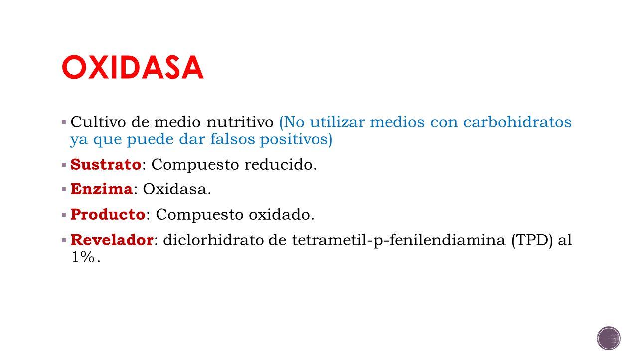 OXIDASA Cultivo de medio nutritivo (No utilizar medios con carbohidratos ya que puede dar falsos positivos)