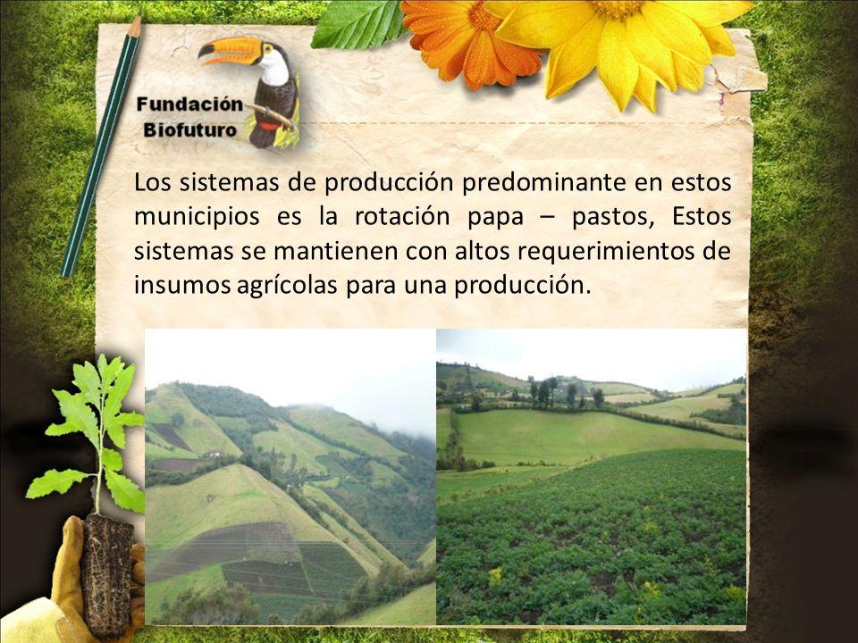 Los sistemas de producción predominante en estos municipios es la rotación papa – pastos, Estos sistemas se mantienen con altos requerimientos de insumos agrícolas para una producción.
