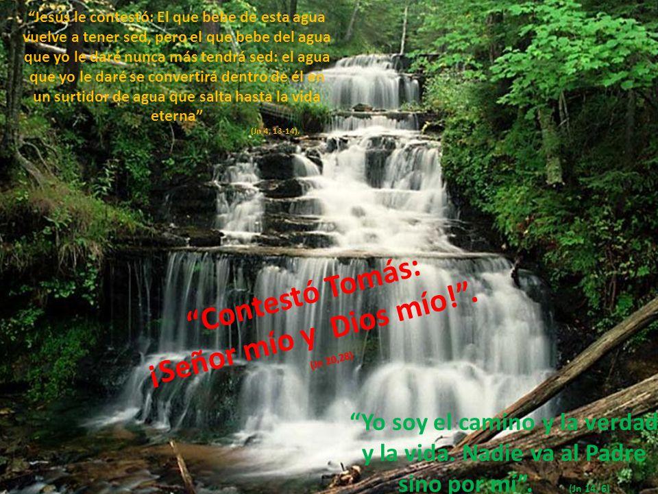 Contestó Tomás: ¡Señor mío y Dios mío! .