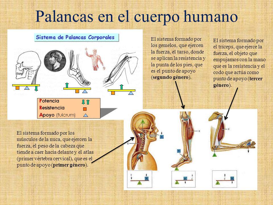 Asombroso Palancas En El Cuerpo Humano Fotos - Imágenes de Anatomía ...