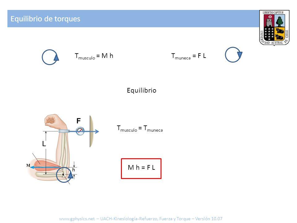 Equilibrio de torques Tmusculo = M h Tmuneca = F L Equilibrio
