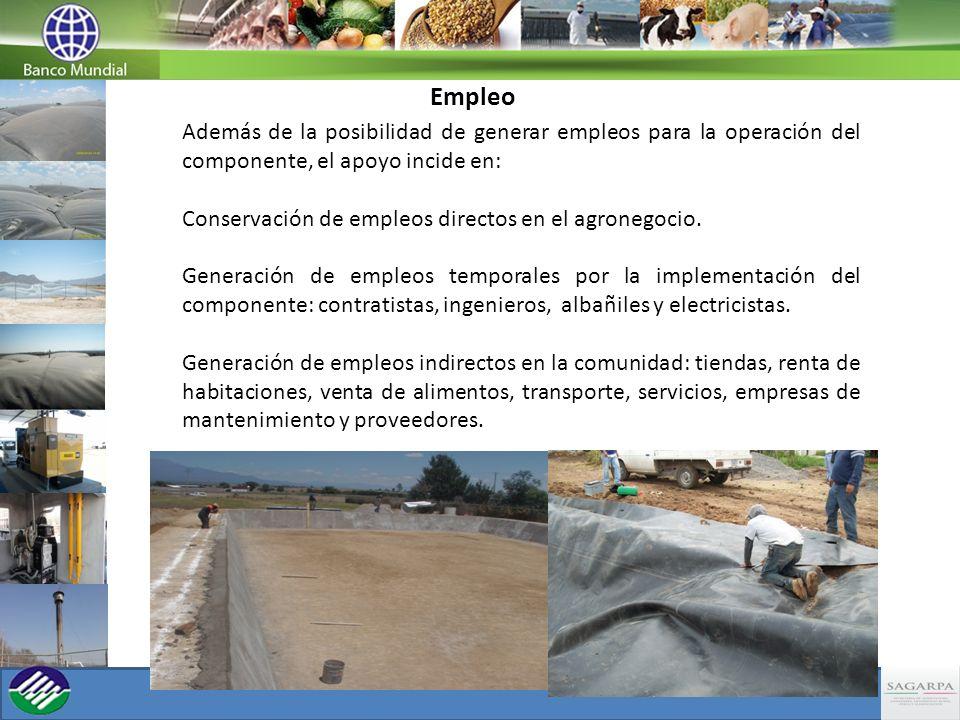 Empleo Además de la posibilidad de generar empleos para la operación del componente, el apoyo incide en: