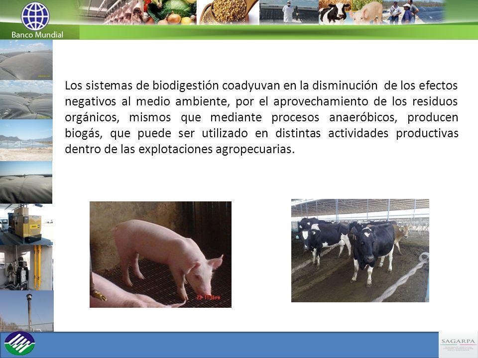 Los sistemas de biodigestión coadyuvan en la disminución de los efectos negativos al medio ambiente, por el aprovechamiento de los residuos orgánicos, mismos que mediante procesos anaeróbicos, producen biogás, que puede ser utilizado en distintas actividades productivas dentro de las explotaciones agropecuarias.
