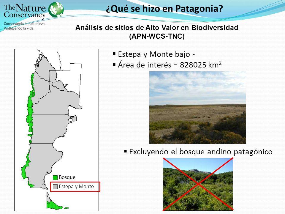 ¿Qué se hizo en Patagonia