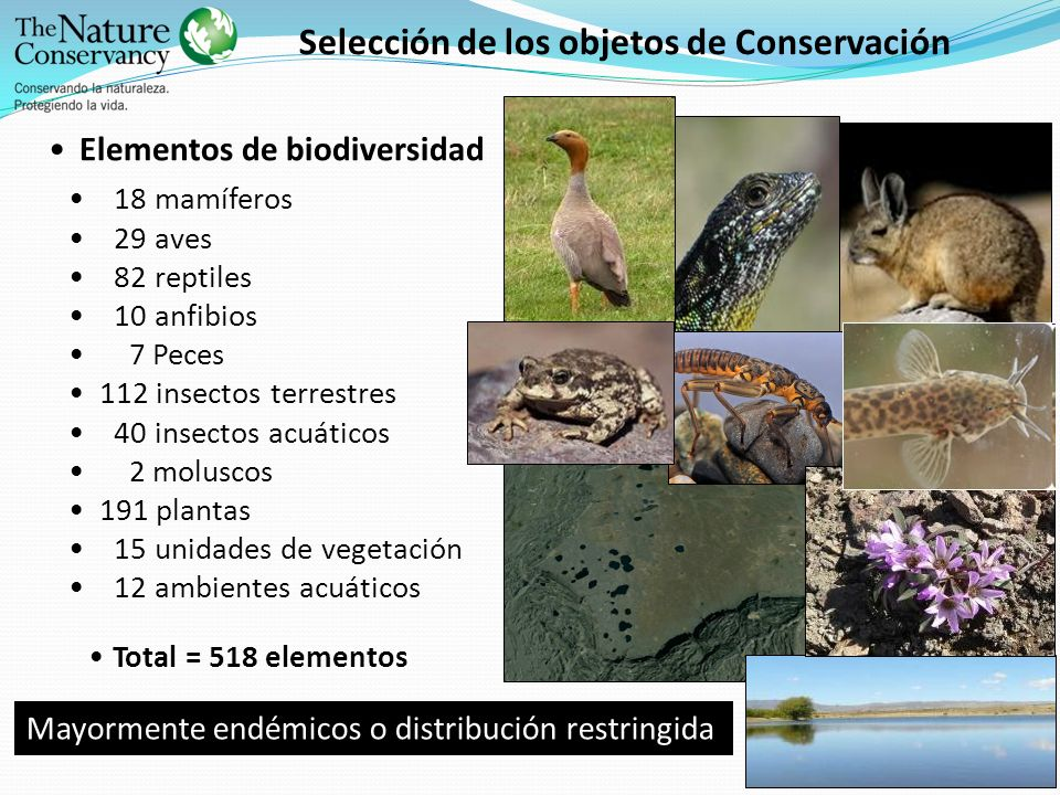 Selección de los objetos de Conservación